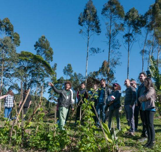 Acibalc adota prática sustentável que compensa gás carbônico com plantação de árvores
